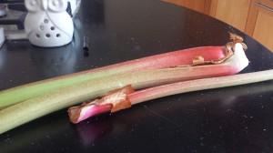 Freshly picked rhubarb